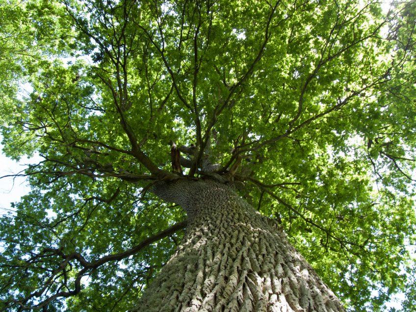 Soirée-débat «Intelligence de l'arbre : de quoi parle-t-on ?»