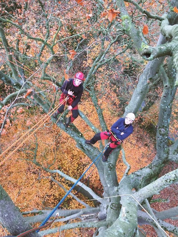 Les apprentis en CS «Arboriste – Elagueur»