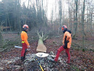 Abattage et façonnage dans la forêt