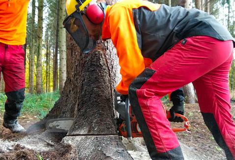 Ouverture du CAPa Travaux Forestiers Adulte